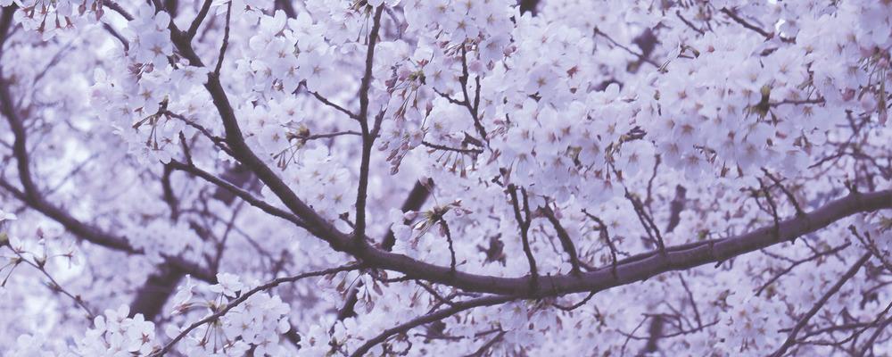大輝興産株式会社/果実の森